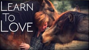 Learning to Love Horses | One Trainer's Journey Away From Riding