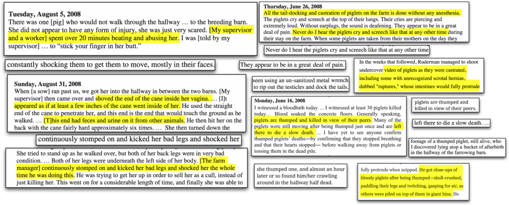 """The image shows a selection of newspaper cuttings.  Sections are highlighted.  Some of the highlighted sections are: """"My supervisor and a worker spent over 20 minutes beating and abusing her.""""  """"shoved the end of his cane inside her vagina… It appeared as if at least a few inches of the cane went inside of her… This end had feces and urine on it from the other animals.""""  """"The farm manager continuously stomped and kicked her bad leg and shocked her the whole time he was doing this."""" """"All the tail docking and castration of piglets on the farm is done without anesthesia… Never do I hear the piglets cry or screech like that at any other time"""" """"Videos of piglets as they were castrated including some with unrecognized scrotal hernias dubbed 'ruptures.' Whose intestines would fully protrude."""" """"piglets are thumped and killed in view of their peers… left there to die a slow death."""" """"He got close-ups of bloody piglets after being thumped=skull-crushed, paddling their legs and twitching, gasping for air as others were piled on top of them in giant bins."""""""