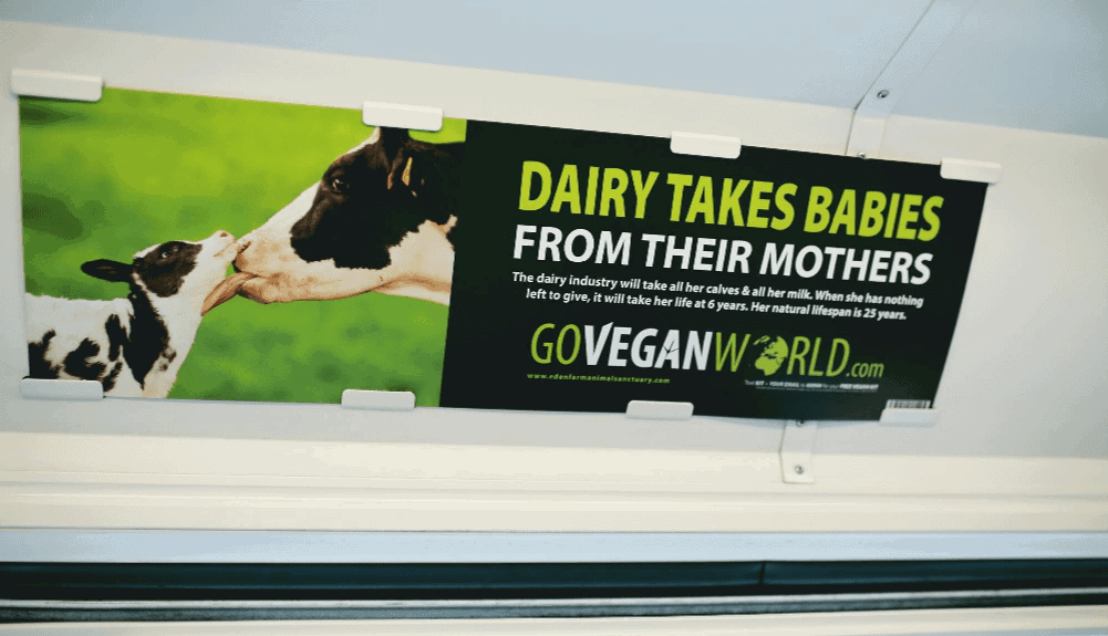 The image is of a GoVeganWorld.com advertisement.  The advert looks to have been placed within a train carriage, above the windows.  On the left of the advert is a close-up of a Holstein-Friesian cow licking a calf under the chin as the calf licks her back.  On the right in large letters are the words: DAIRY TAKES BABIES FROM THEIR MOTHERS.  In smaller letters: The dairy industry will take her calves and all her milk.  When she has nothing left to give, it will take her life at 6 years.  Her natural lifespan is 25 years.  At the bottom is the GoVeganWorld.com logo.