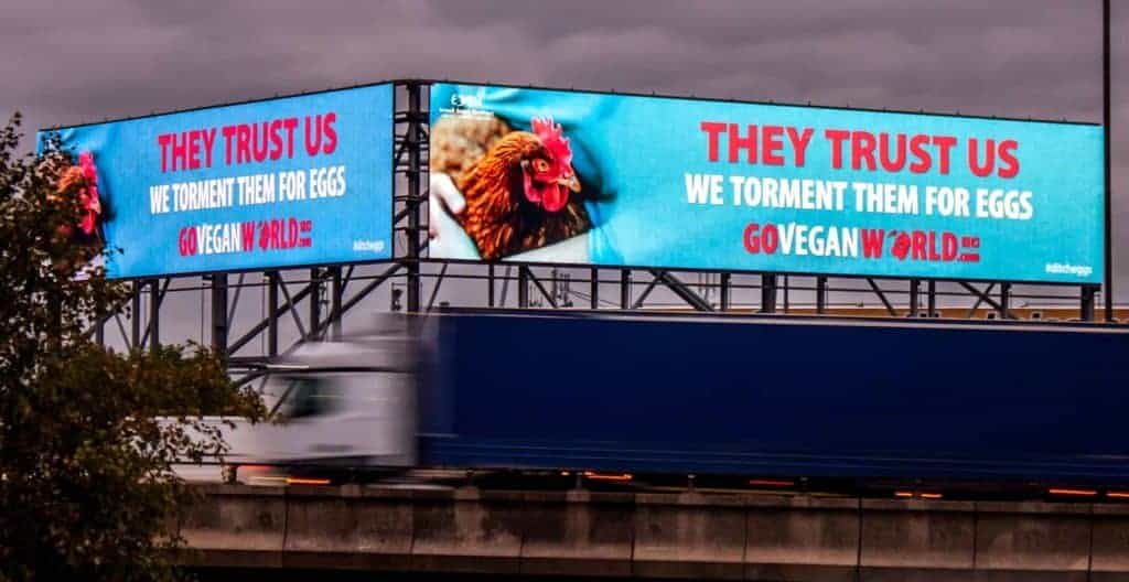 """Diana, a rescued chicken from Eden Animal sanctuary, is shown on two huge road side billboards.  Both billboards are identical.  They show a close up of Diana, along side the words"""" They trust us. We torment them for eggs. GoVeganWorld.com #ditcheggs."""