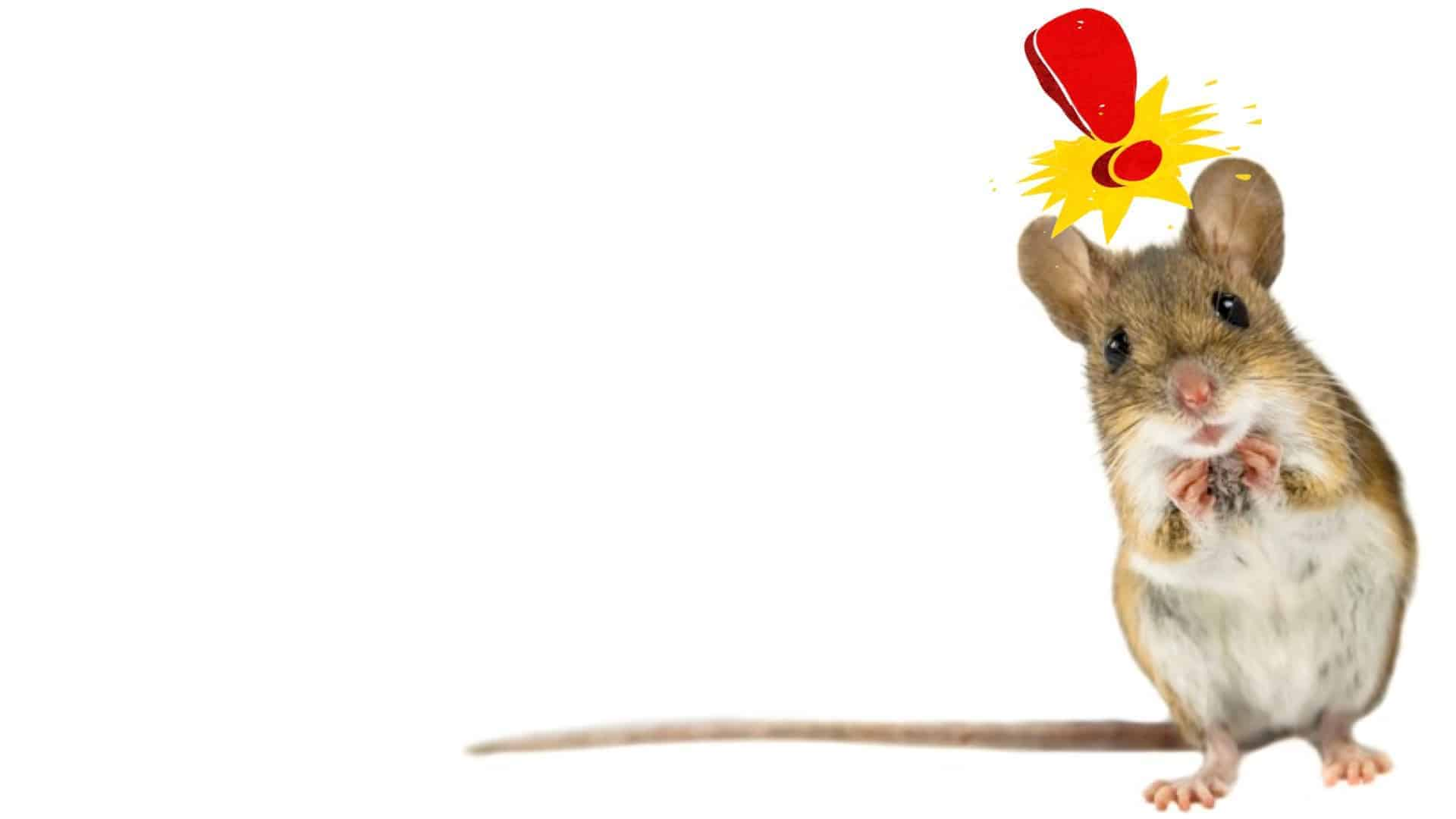 A nervous looking field mouse, standing upon his hind legs is seen. An exclamation mark in red is above his head to indicate his alarm.