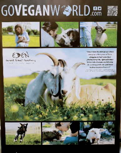The image is of a GoVeganWorld.com poster.  Their logo is across the top.  Below this are a number of photographs taken of the animals at the Eden Farmed Animal Sanctuary.  They depicts pigs, cows and a lamb in the smaller images but the largest one, in the center, is of two goats shown in close-up, in a summer meadow.   One goat is snuggling the other.  In several of the other images, humans are shown petting the animals.