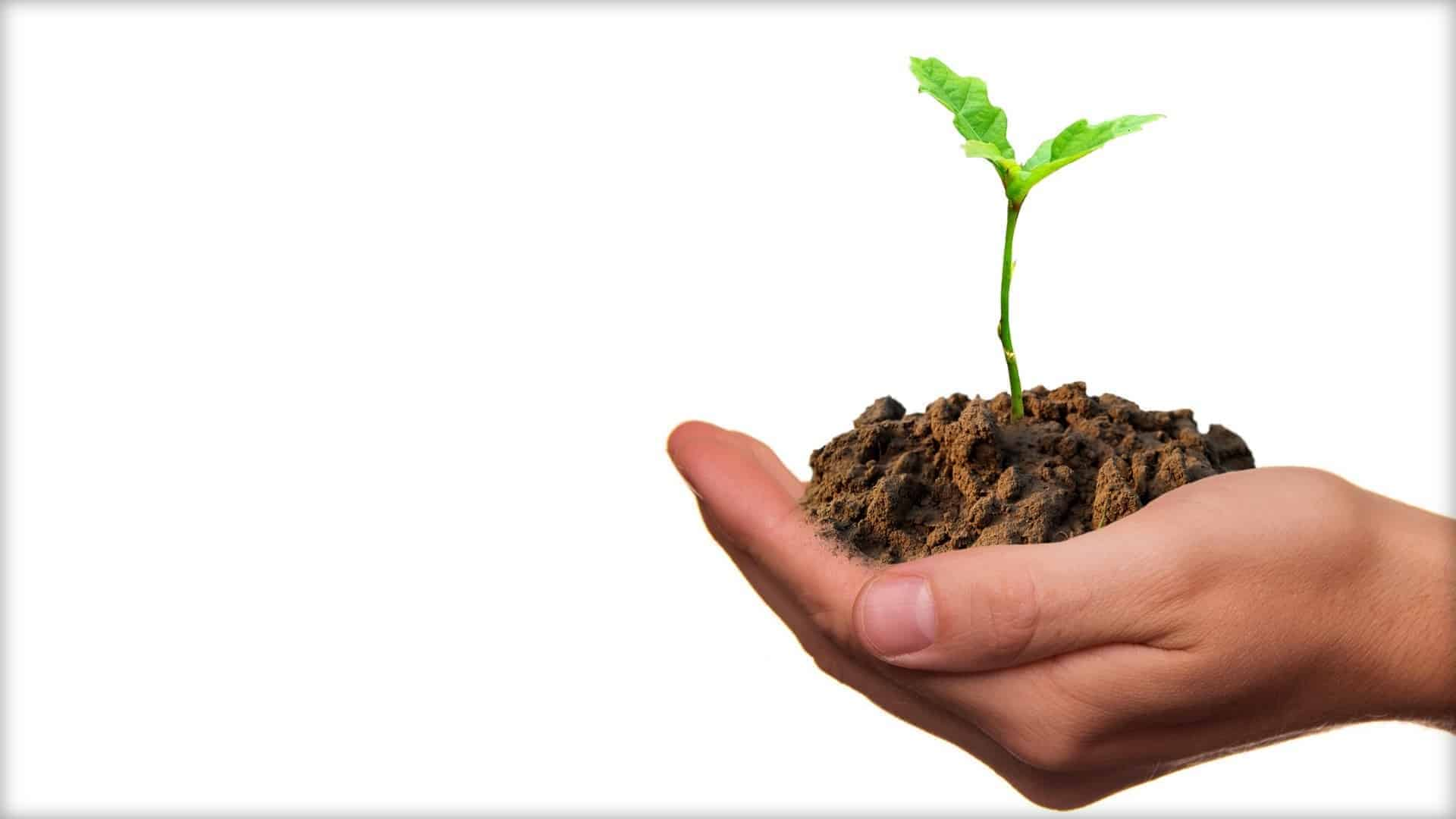 A close-up of a hand is shown. The hand is cupping a handful of soil with a small plant shoot growing out of it.
