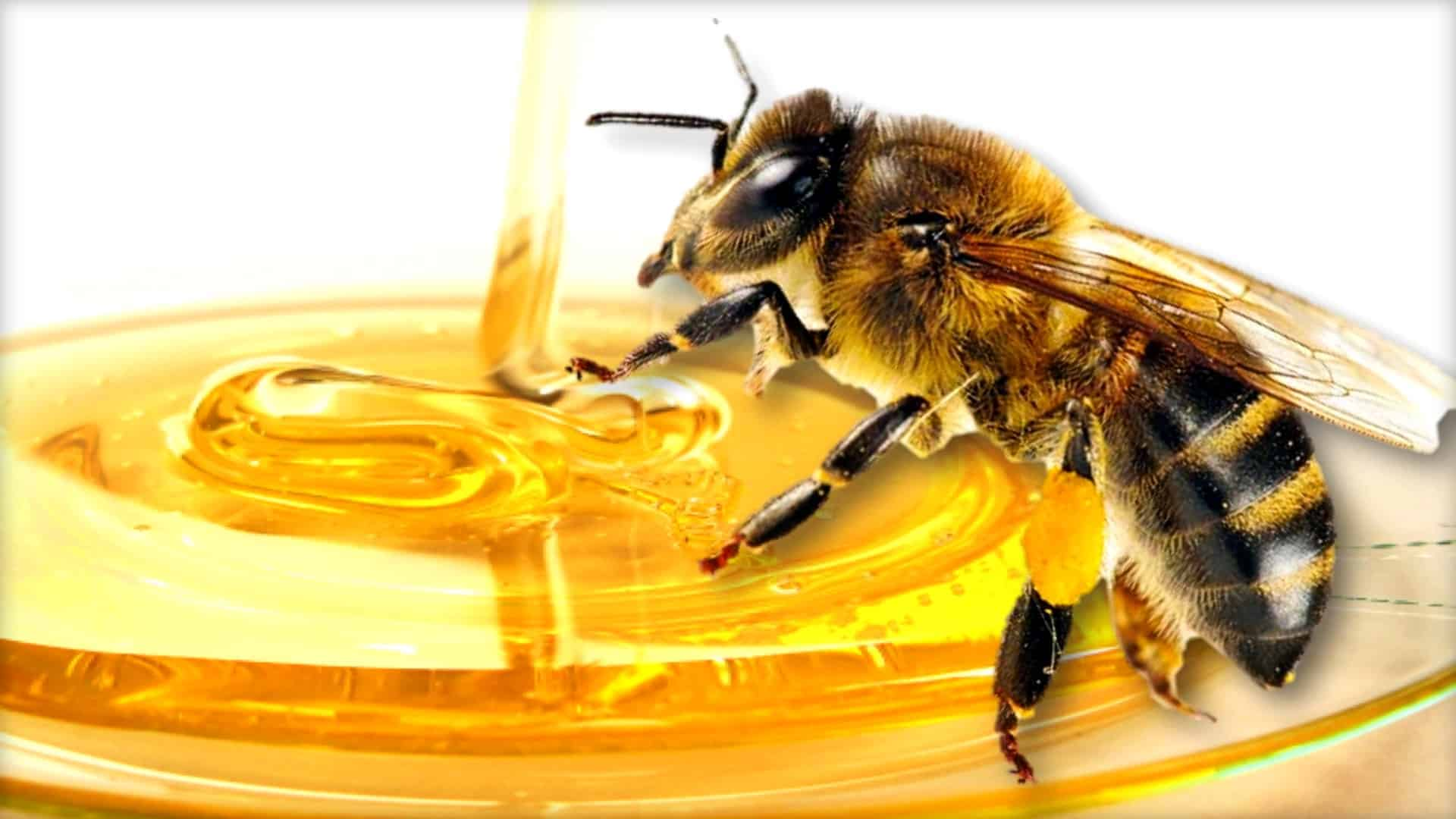 The image shows a close up of a honeybee as if in the process of eating honey.