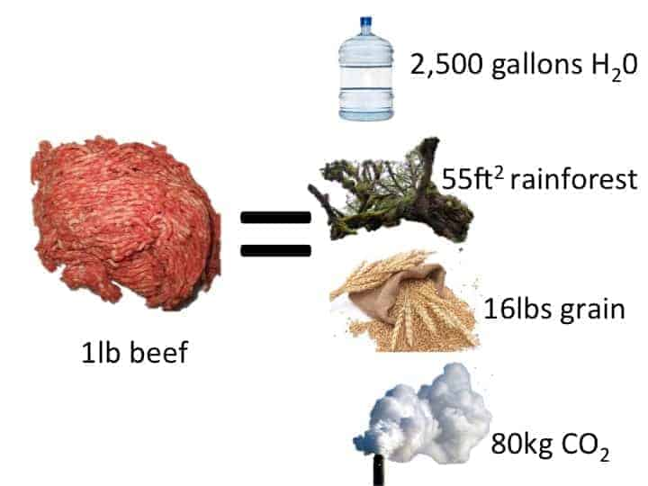The image is in the form of a mathematical equation.  On the left is an image of ground beef; this is labeled 1lb beef.  In the center is an equals sign.  On the right, in a column are: A water bottle – 2,500 gallons H2O, A tree branch – 55ft2 rainforest, A grain bushel – 16lbs grain and a gas cloud – 80kg CO2