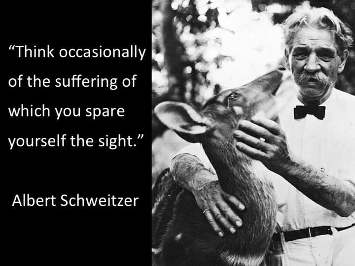 """Albert Schweitzer is shown petting a white tailed deer.  Along side is a quote from him in white lettering on a black background: """"Think occasionally of the suffering of which you spare yourself the sight."""""""