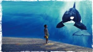 A child is shown standing in front of a large glass screen. The screen separates him from the water behind. A huge Orca can be seen with its nose close to the glass, opposite the child. A second Orca is seen in the background. The child is looking up at the beautiful creature, absently spilling popcorn on the floor.