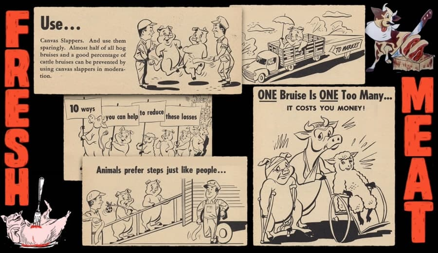 Various cartoon information posts directing how to best transport animals without damage to reduce production losses