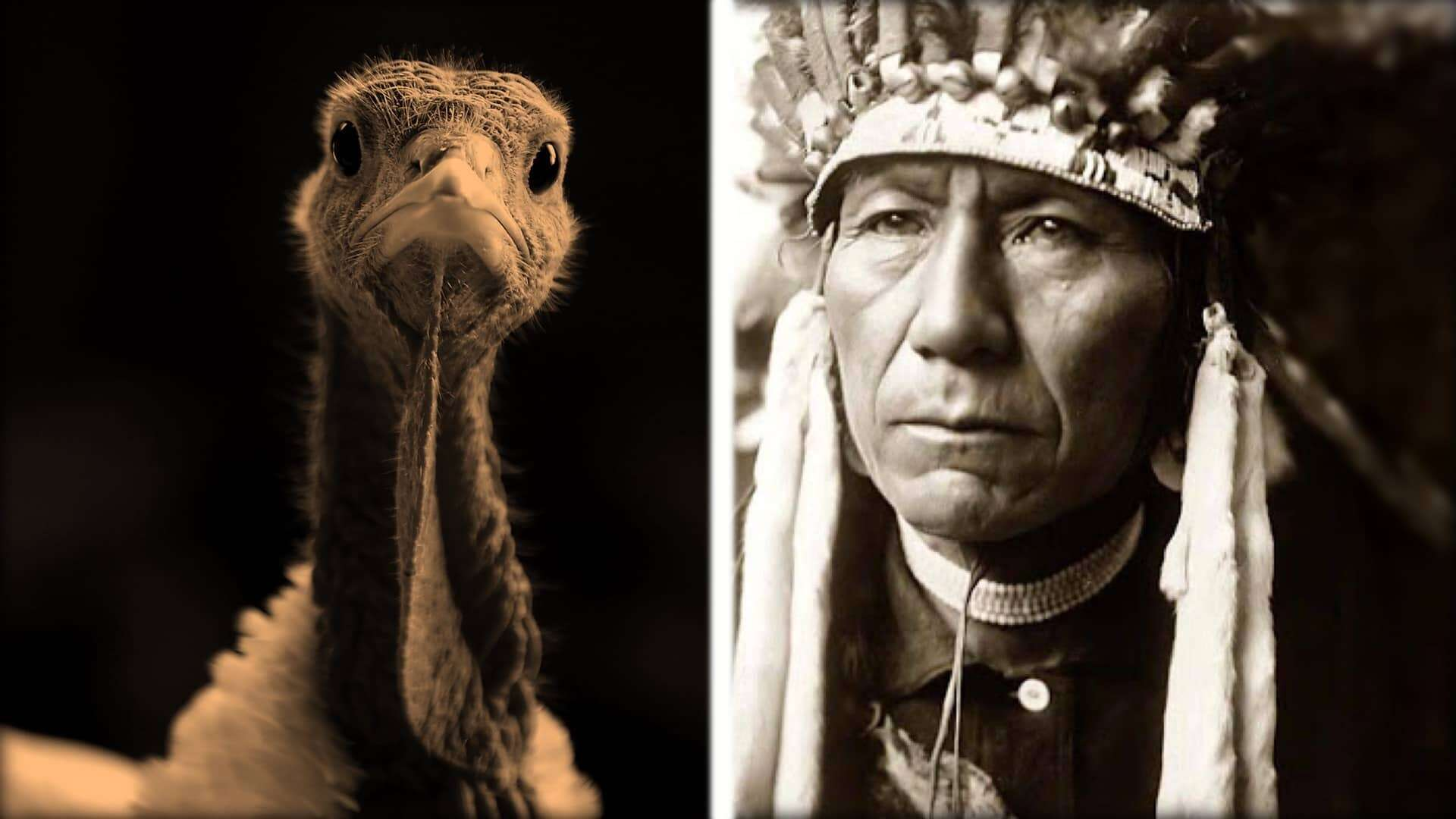 The image is split in two. On the left is a close-up of a turkey from the neck up. On the right is a photograph of a member of the first nation with full headdress.