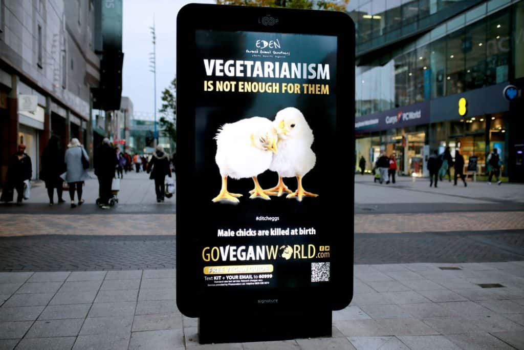 """The scene is one of a highstreet.  Dominating the center of the image is an illuminated,  free standing, advertisement hording.   On the hording is a Eden Animal Sanctuary poster.  The image is of two beautiful new born chicks.  They are comforting each other.   Above the chicks are the words """"Vegetarianism is not enough for them.  Below: Male chicks are killed at birth.  Below that GoVeganWorld.com."""