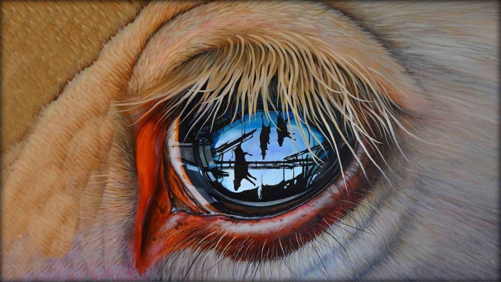 An extreme close-up of an animal's eye is shown. In the reflection of its cornea, multiple butchered animals can be seen. They are hanging from hooks by their back legs.