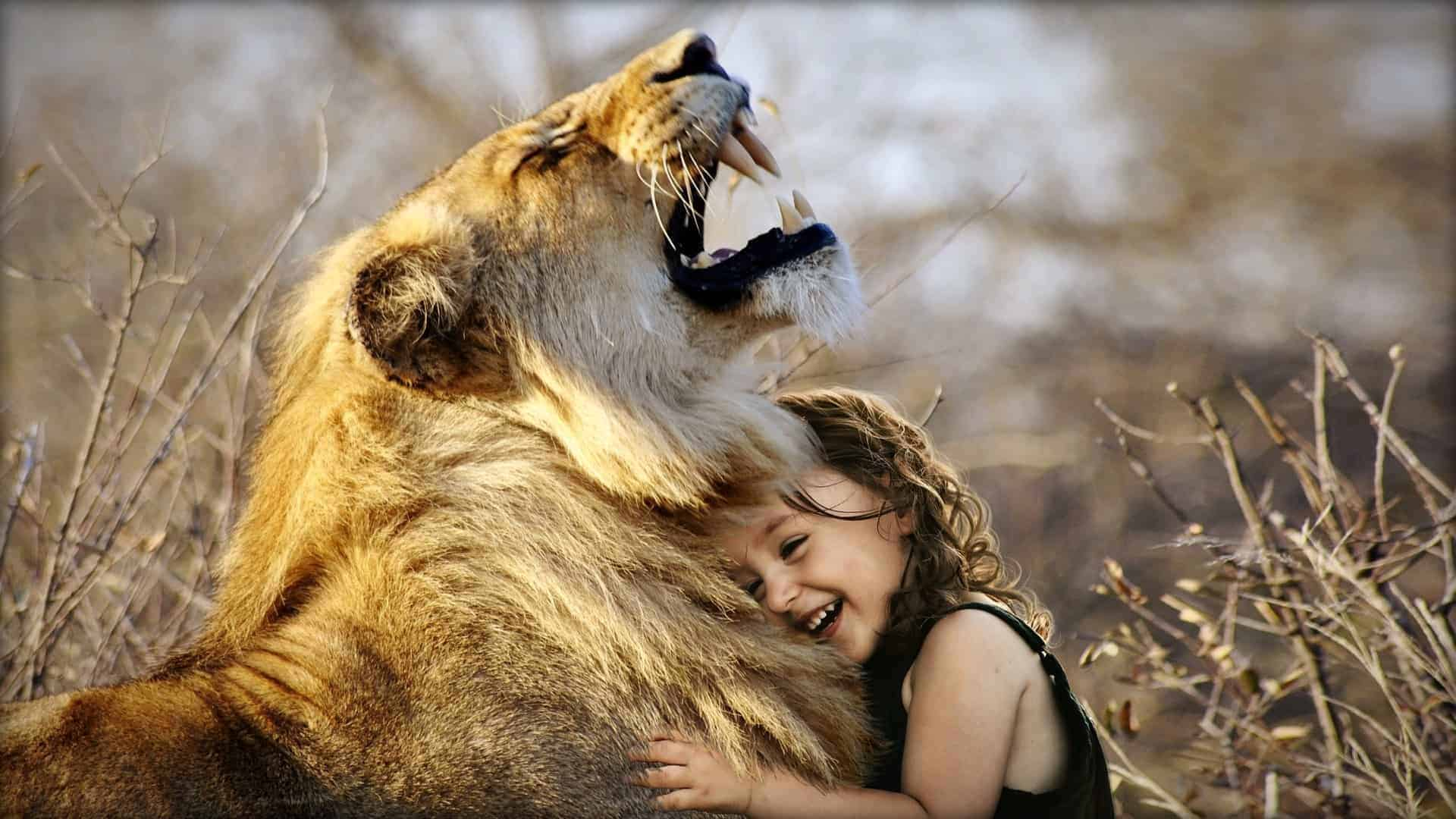 The image shows a lion roaring in the wild as it is apparently hugged by a small child.