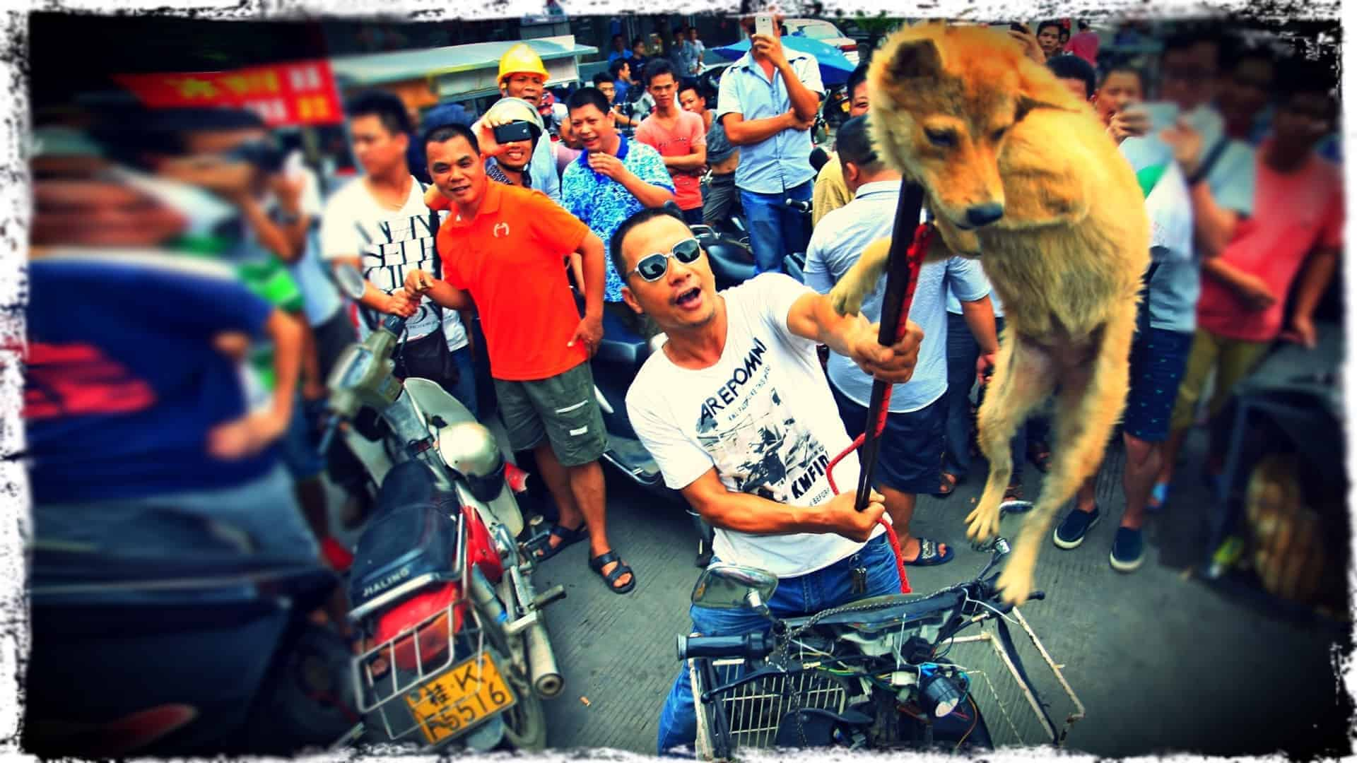 Surrounded by a milling crowd, a poor dog is lifted into the air, as in triumph by a person in a tee-shirt. The person uses an animal catcher's noose, which is tight around the dog's neck to lift it. The animal is in distress.