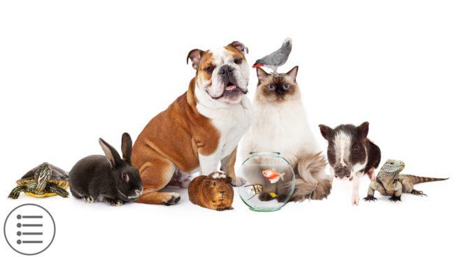 Pets & Veganism
